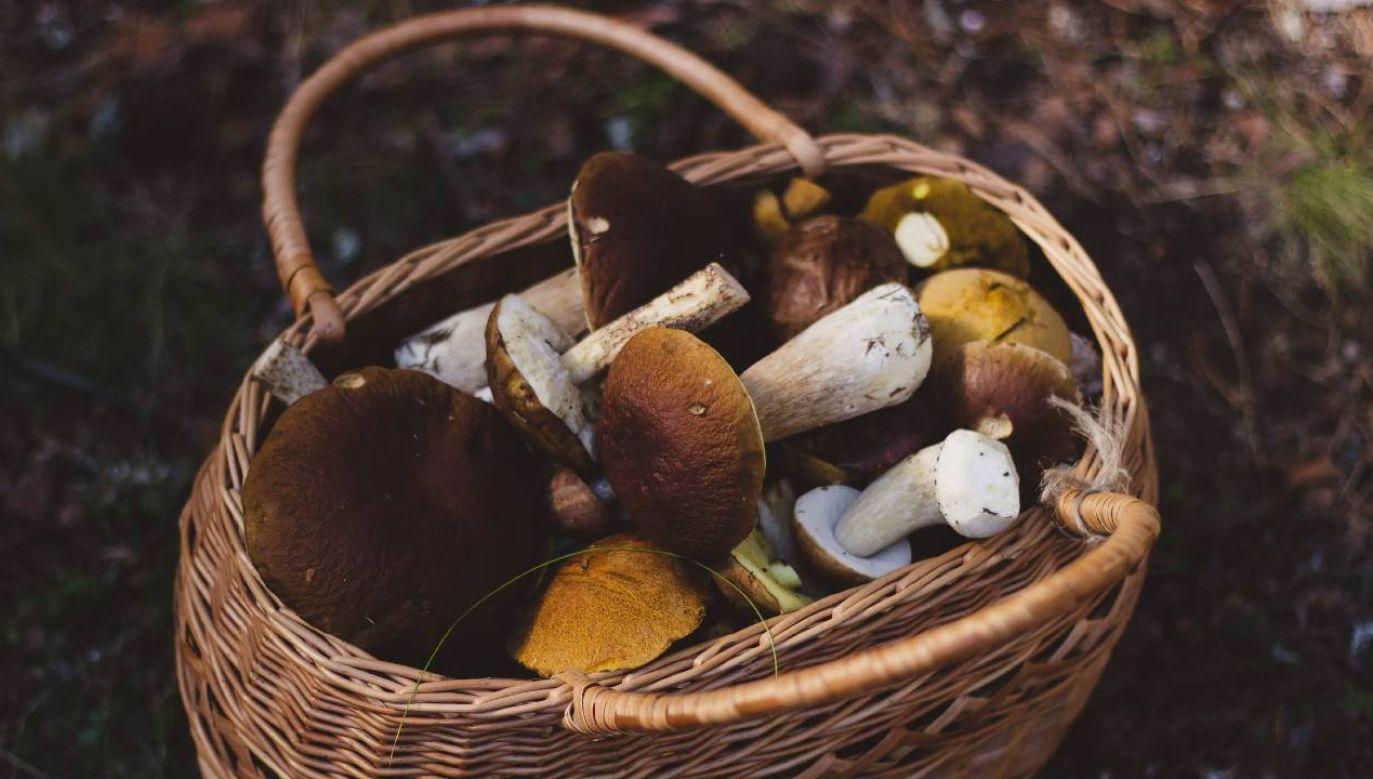 Zbierając grzyby łatwo popełnić błąd (fot. Pexels)