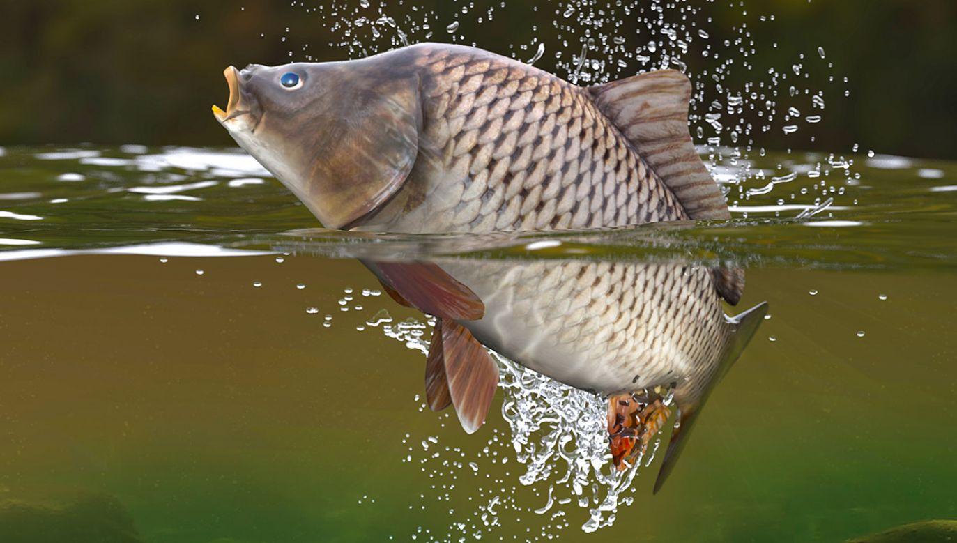 Osoba, która została zatrudniona na dziale rybnym, może odmówić pracy przy sprzedaży żywych karpi (fot. Shutterstock/bulentevren)