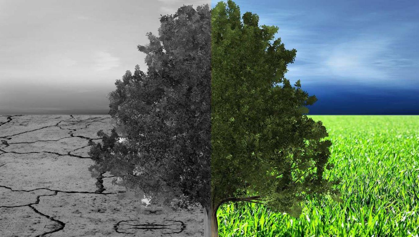 W przekonaniu sekretarza generalnego ONZ niezbędna jest dekada transformacji (fot. Pixabay/kahll)
