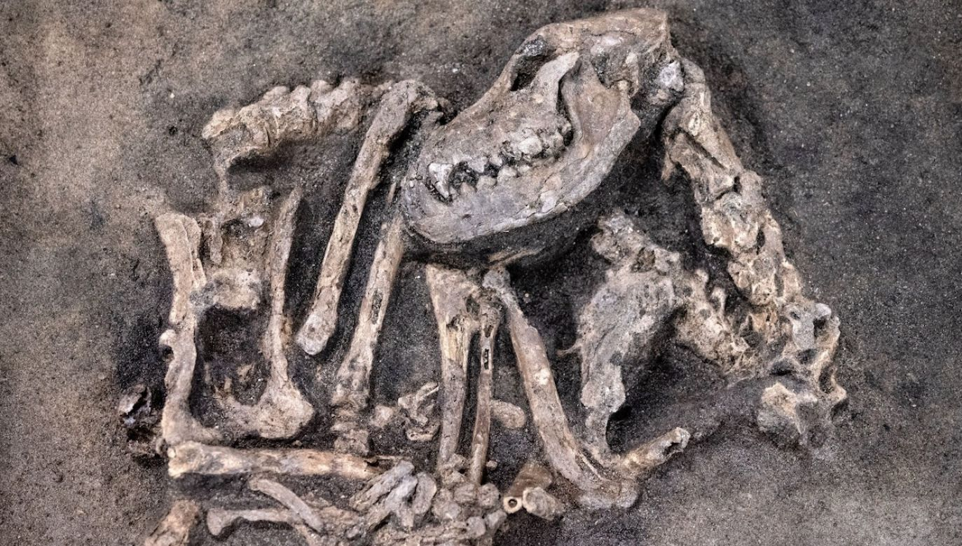 Pies został pochowany ponad 8400 lat temu (fot. PAP/EPA/Johan Nilsson/TT)