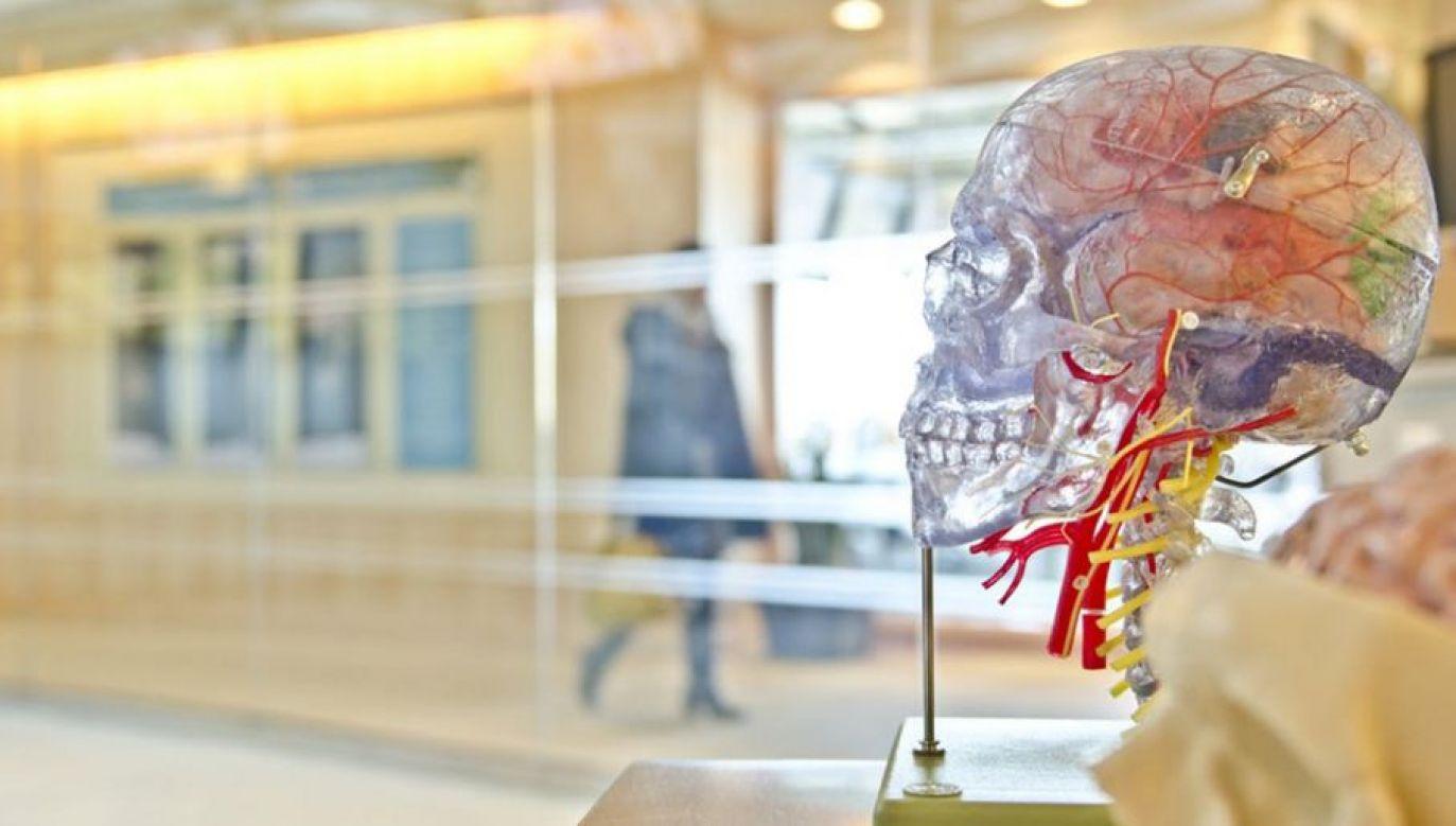 W Polsce rocznie zdarza się 70 tys. udarów mózgu (fot. Pexels)