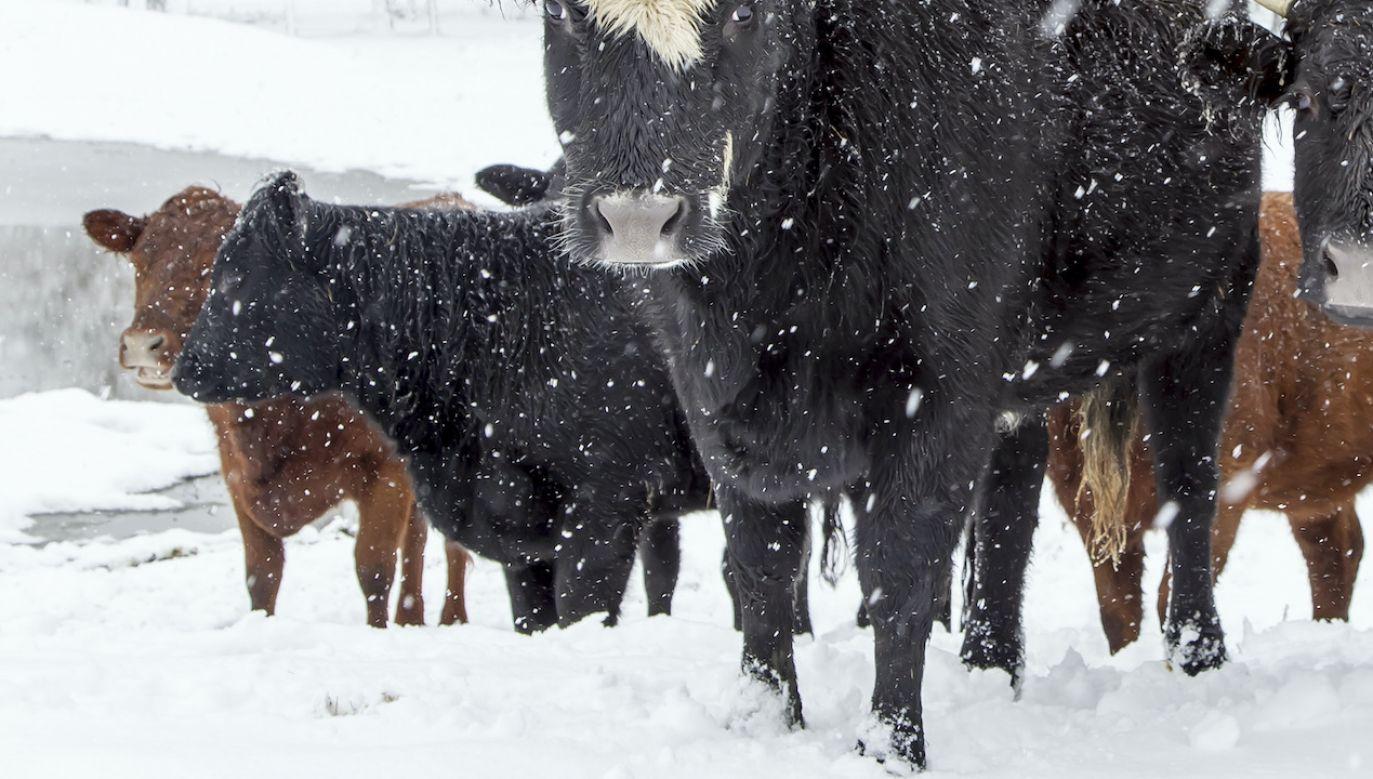 Zwierzęta zostały bez opieki po śmierci ich gospodarzy (fot. Shutterstock, zdjęcie ilustracyjne)
