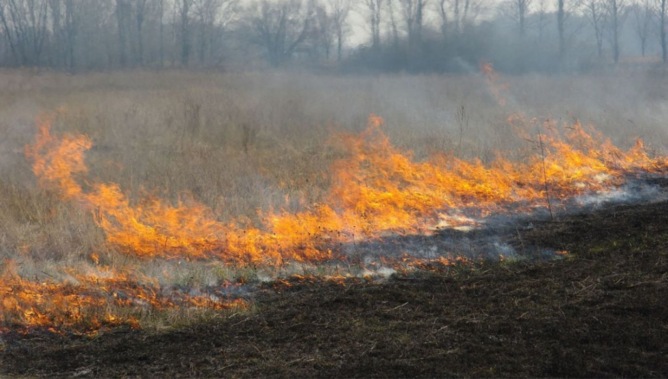 Wypalanie traw to wiosenna plaga (fot. Wiki/Ilya)