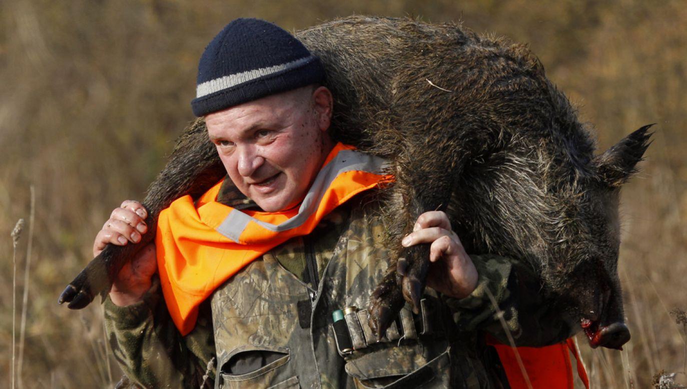 By ułatwić myśliwym odstrzał zezwolono na praktyki zakazane prawem łowieckim (fot. REUTERS/Vasily Fedosenko)