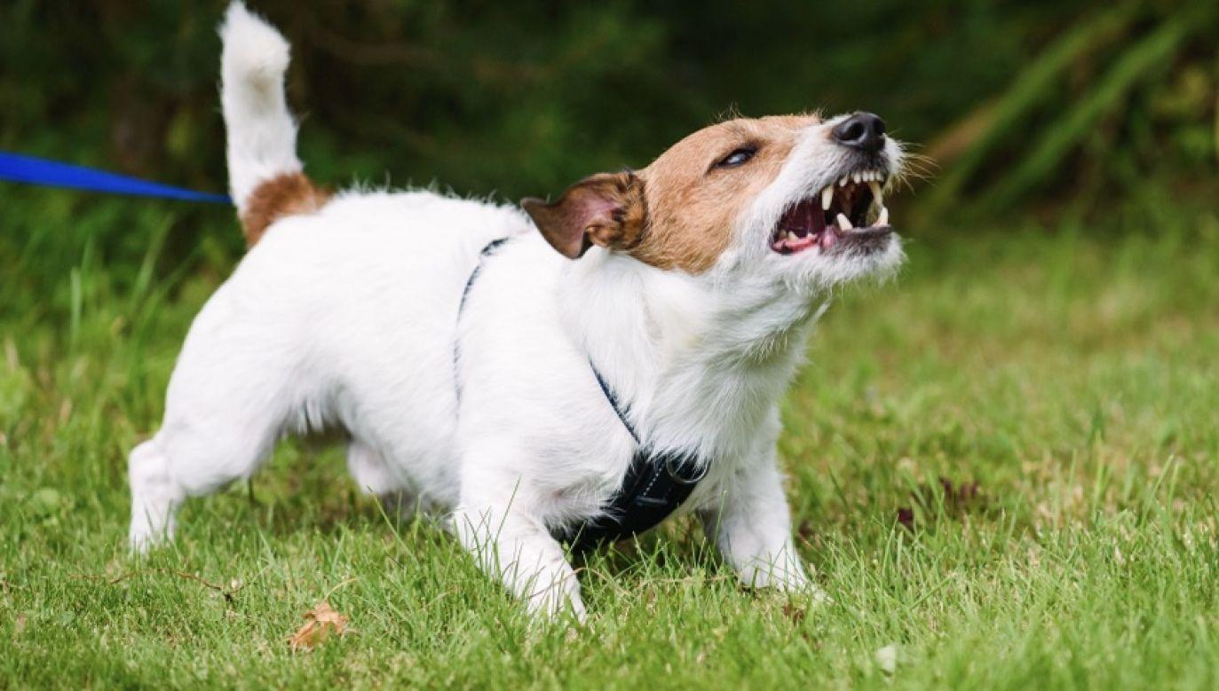 4-letnie dziecko zostało pogryzione przez psa (fot. Shutterstock/alexei_tm)