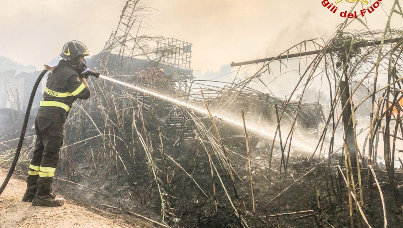 Ogień zniszczył 10 tysięcy hektarów lasów (fot. Forum)