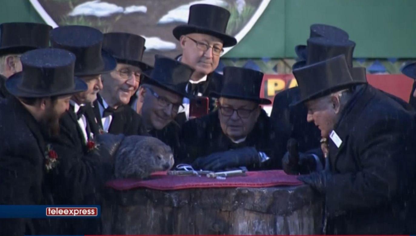 Święto obchodzone jest 2 lutego w Stanach Zjednoczonych i Kanadzie (fot. TVP.Info)
