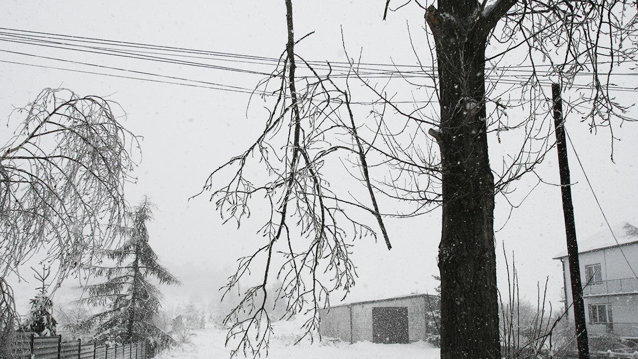 Ponowny atak zimy – pogoda, wtorek 26 stycznia (fot. PAP/Andrzej Grygiel)