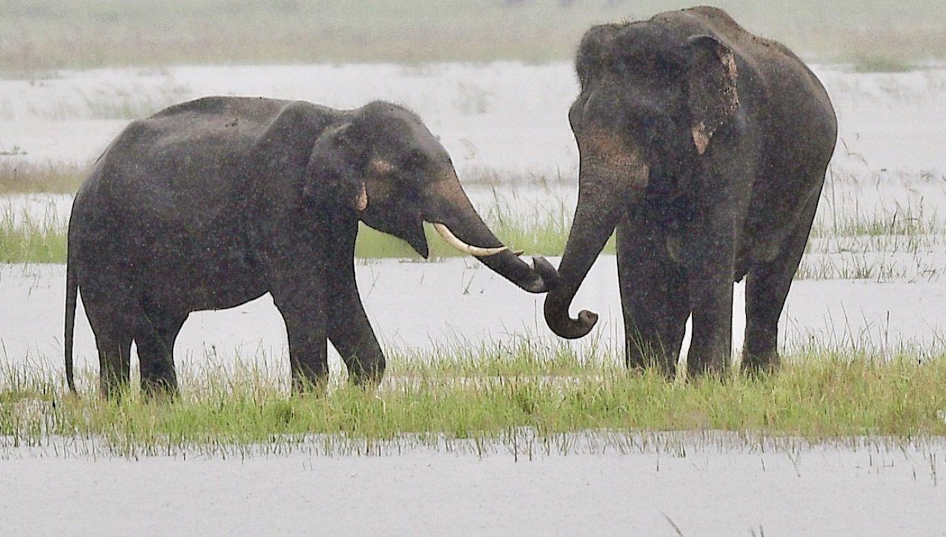 Większość słoni padło przy wodopoju (fot. PAP/EPA/STR)