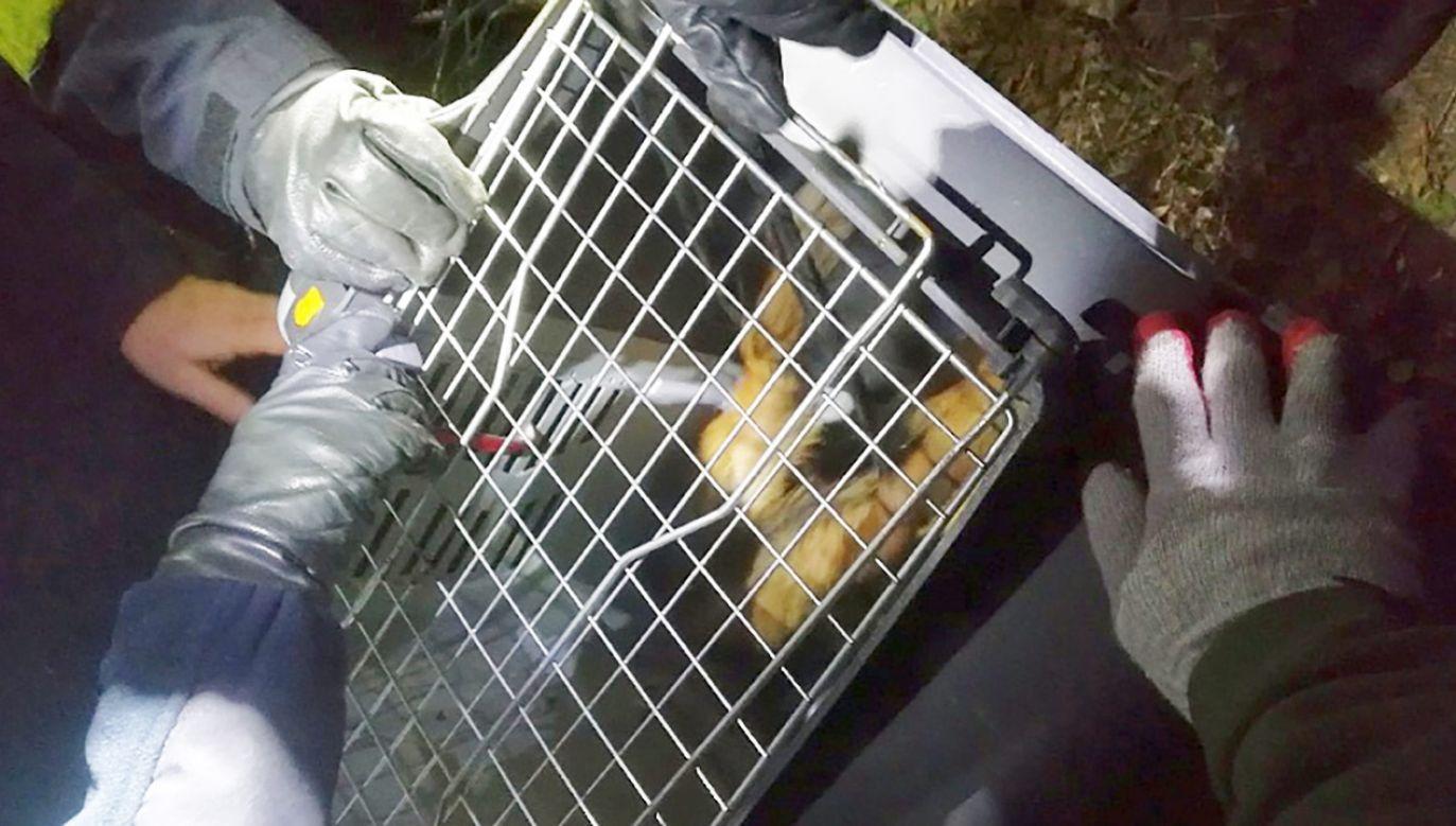 Mężczyzna został zabrany do szpitala (fot. Straż miejska)