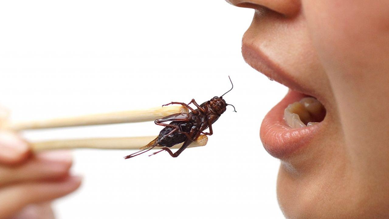 Pierwsze owady używane do produkcji żywości spodziewane są w Szwajcarii jesienią (fot. Shutterstock/ wk1003mike)