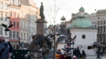 Gołębie na Rynku Głównym w Krakowie (fot. PAP/Łukasz Gągulski)