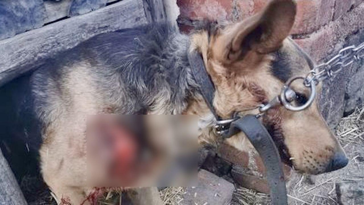 Ranne zwierzę trafiło od schroniska, gdzie udzielono mu pomocy (fot. Schronisko dla zwierząt w Świdnicy)