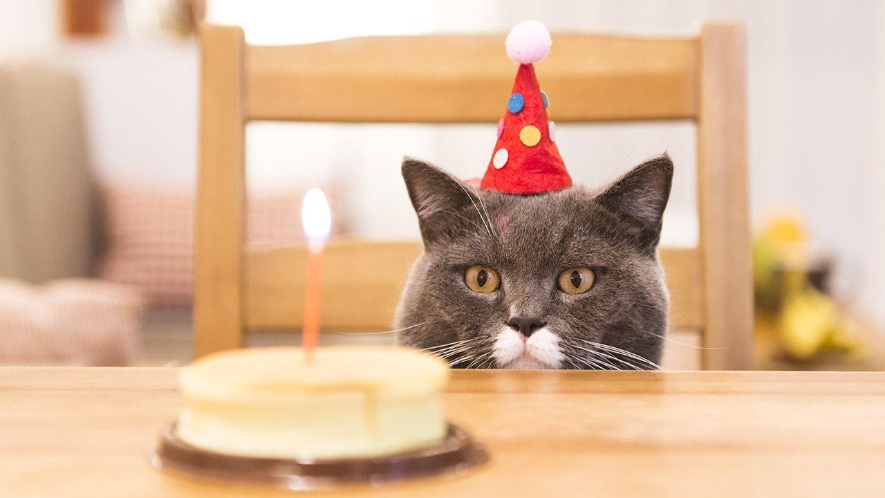 Kot się nie zakaził (fot. Shutterstock/Chendongshan)