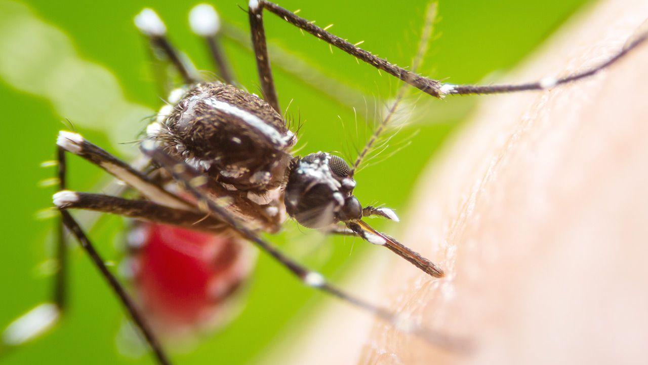 16 proc. rodzin owadów, to gatunki jadowite (fot. Shutterstock)