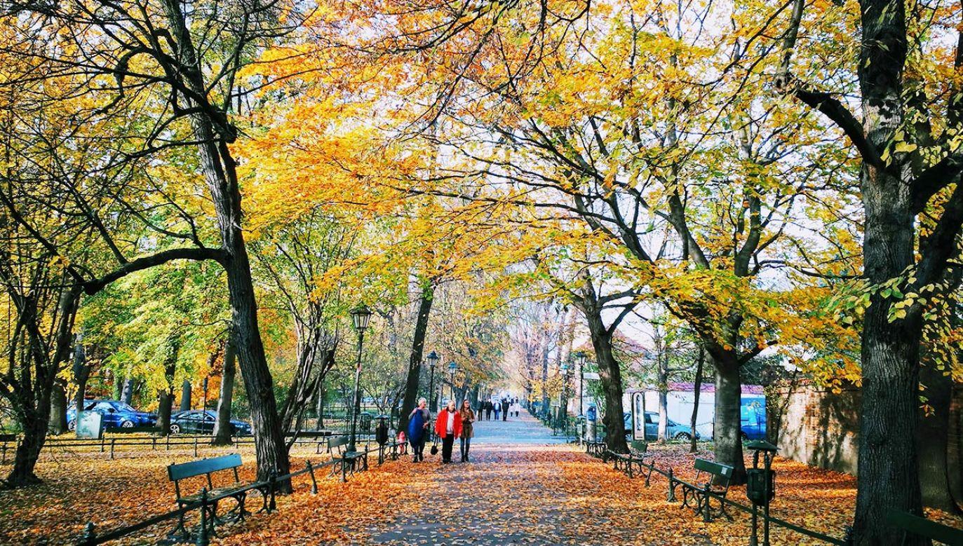 Najbliższe dni przyniosą ciepłą jesień (fot. Shutterstock)