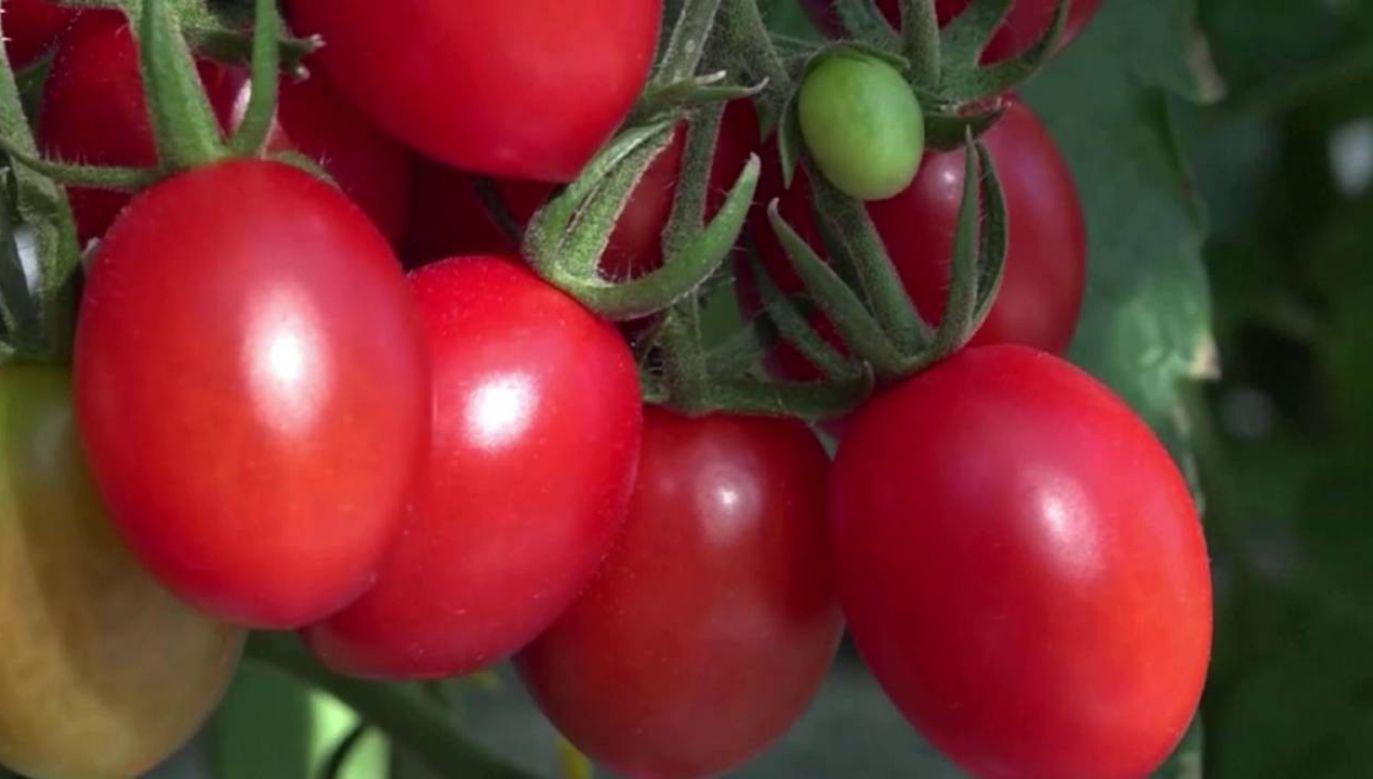 Pomidory zostały dopuszczone do sprzedaży (fot.)