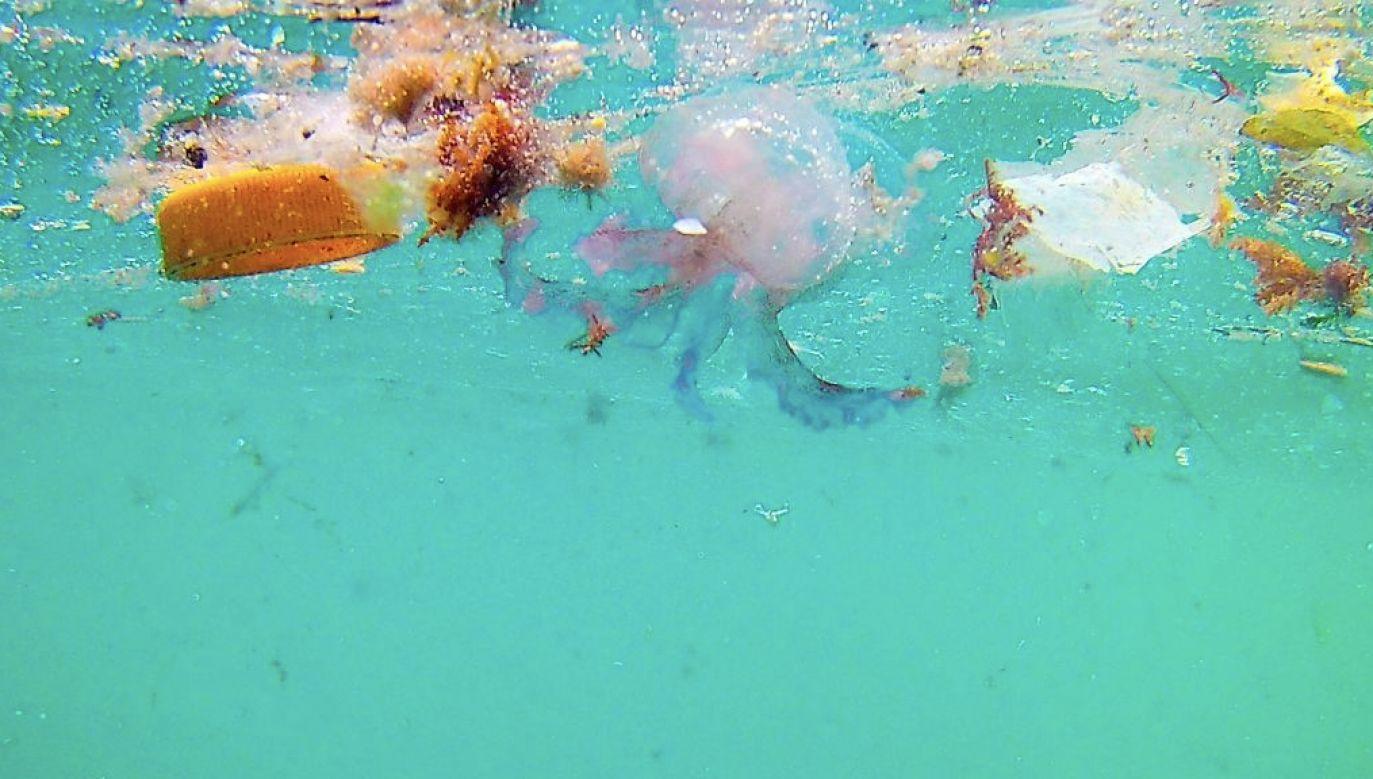 Trawa rośnie w morzu na głębokości do 40 metrów (fot. Marka/Universal Images Group/Getty Images)