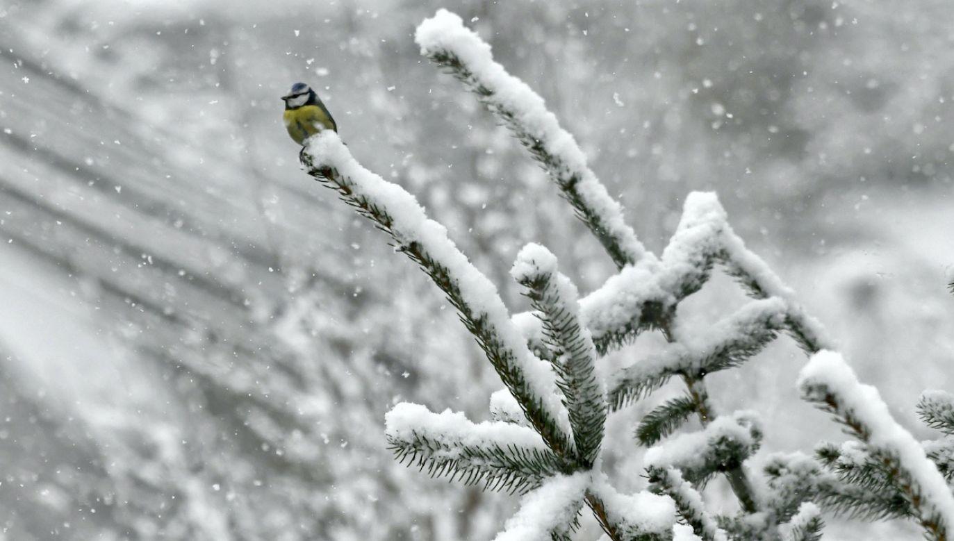W wysokich górach leży ponad metr śniegu (fot. PAP/D.Delmanowicz, zdjęcie ilustracyjne)