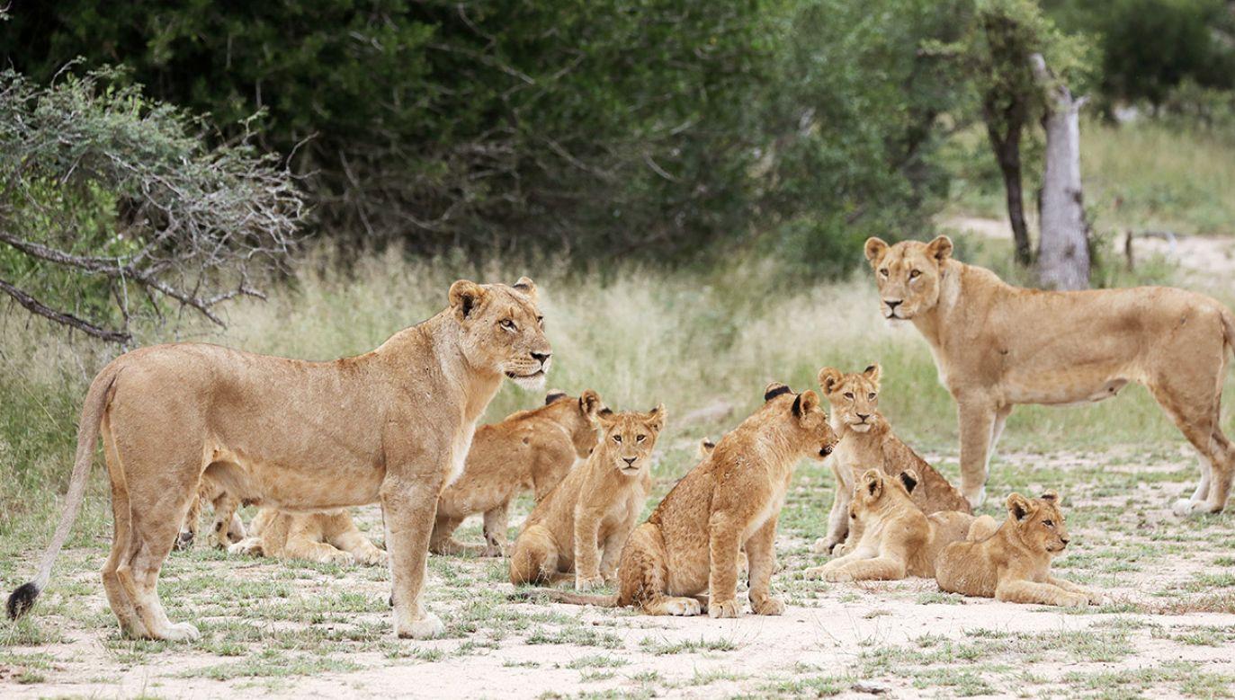 Okoliczni mieszkańcy mają zachować czujność (fot. REUTERS/Siphiwe Sibeko)