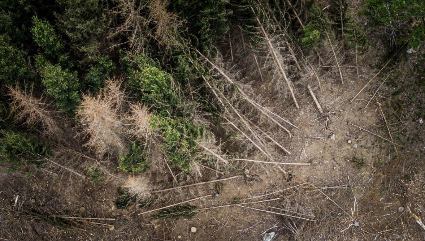 Wywołane suszą wymieranie drzew może utrzymać się nawet przez kilka lat (fot. Florian Gaertner/Photothek via Getty Images)