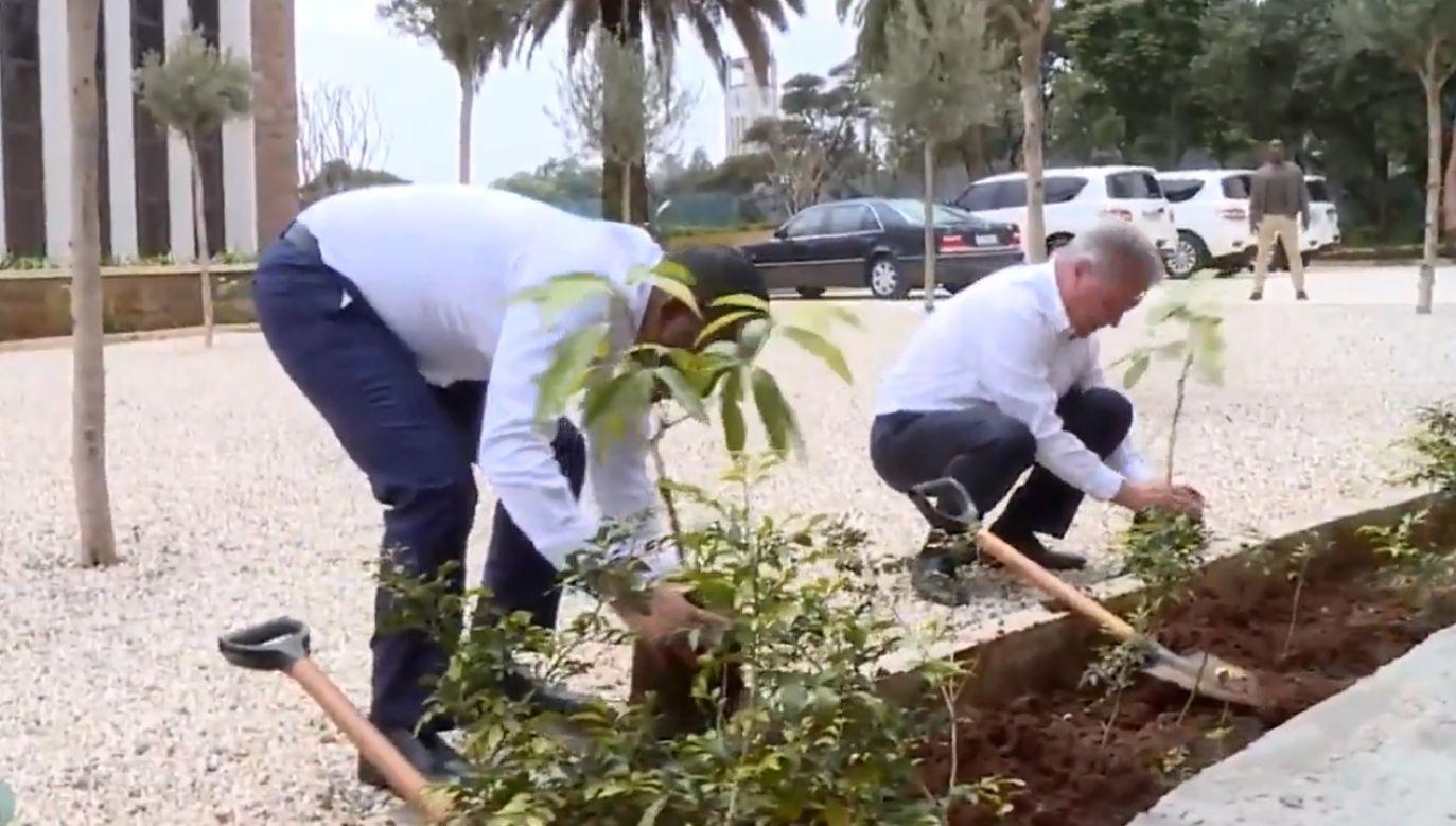 Rząd w Etiopii wprowadził projekt posadzenia 4 bln drzew (fot. Office of the Prime Minister - Ethiopia)
