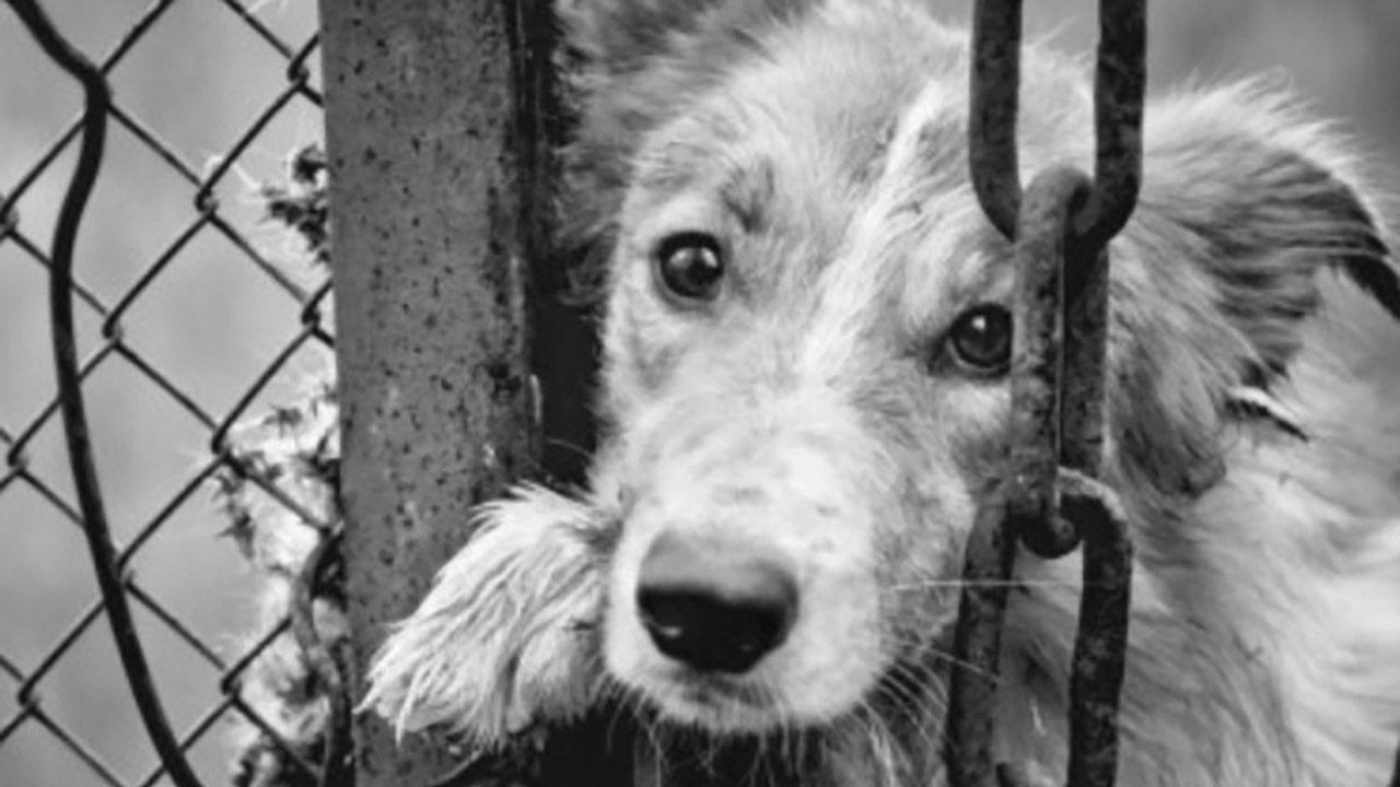 Za znęcanie się nad zwierzętami grozi kara więzienia do lat 5 (fot. KPP w Białobrzegach)