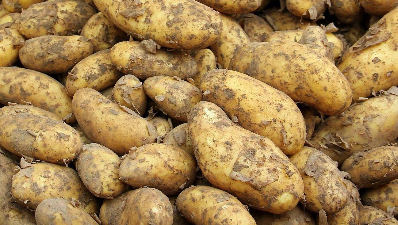 Jak kształtują się ceny ziemniaków? (fot. Pixabay)