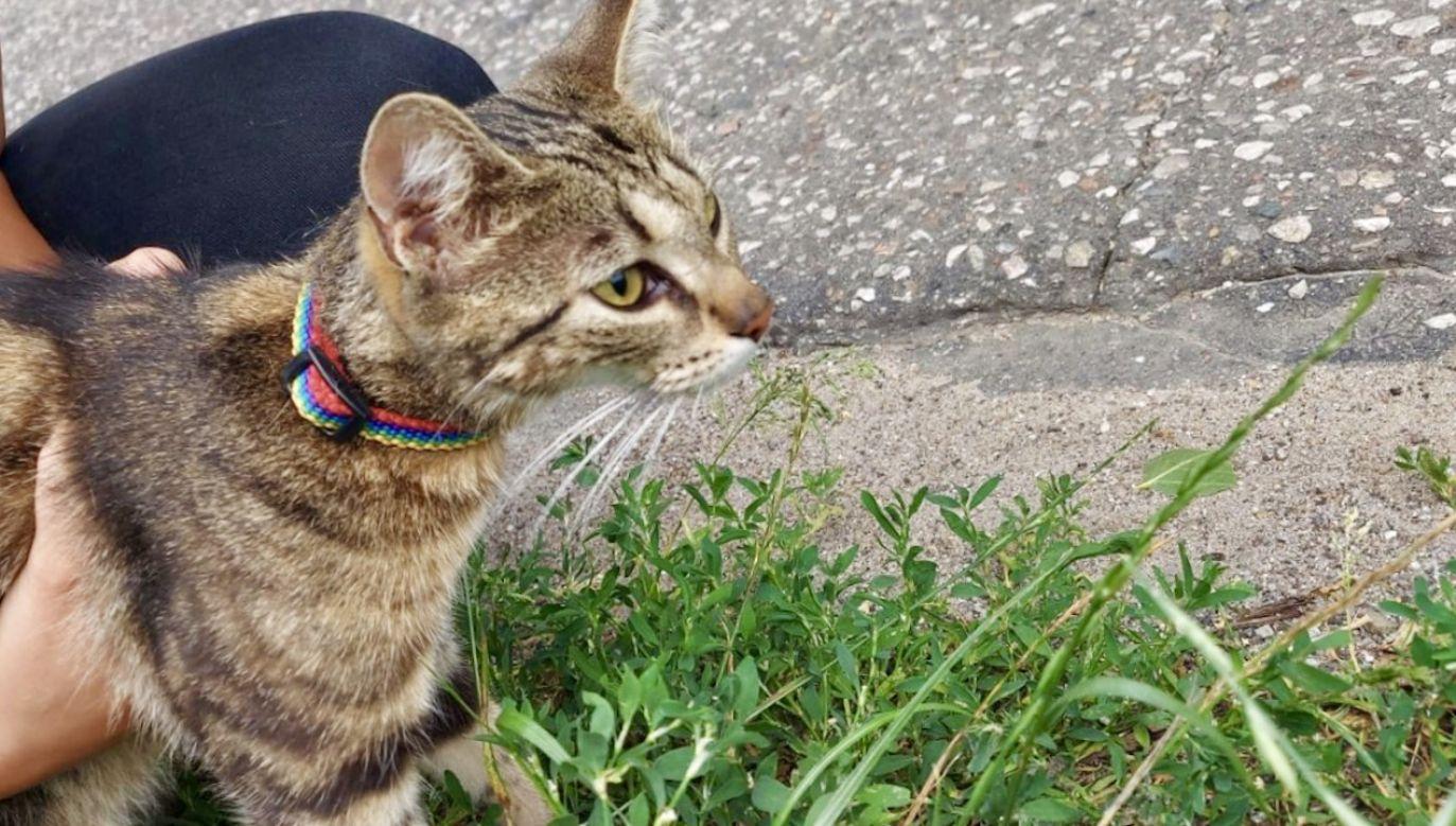 Kotka wróciła do swoich właścicieli (fot. KPP Piła)