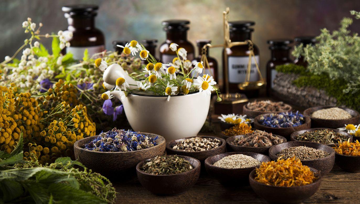 W okresie wzmożonej aktywności wirusów, warto zapoznać się z podstawowymi informacjami dotyczącymi roślin leczniczych (fot. Shutterstock/Sebastian Duda)