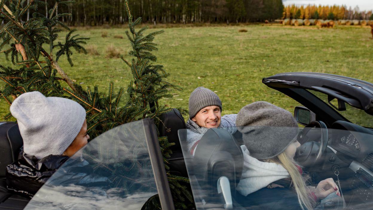 Obyło się bez większych problemów z zapakowaniem choinki do samochodu  (fot. TVP)