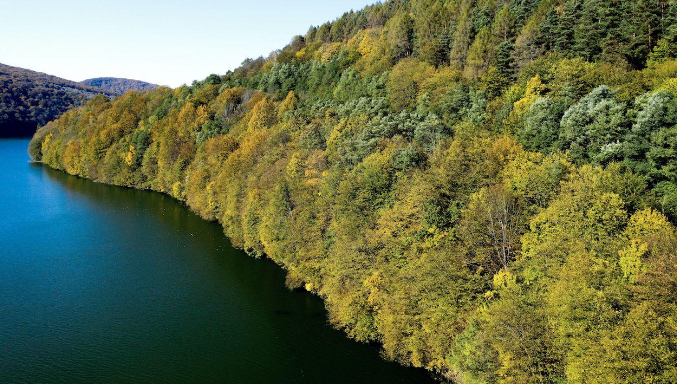 Buk jest jednym z najważniejszych składników lasów liściastych strefy umiarkowanej (fot. arch.PAP/Darek Delmanowicz)