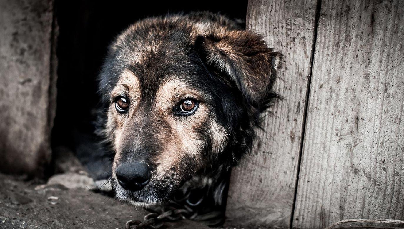 Poseł PiS Bartłomiej Wróblewski, który zagłosował przeciwko nowelizacji ustawy o ochronie zwierząt, uważa, że niektóre przepisy wprowadzają znaczące ograniczenia m.in. w kwestii wolności religijnej (fot. Shutterstock/Vera Larina)