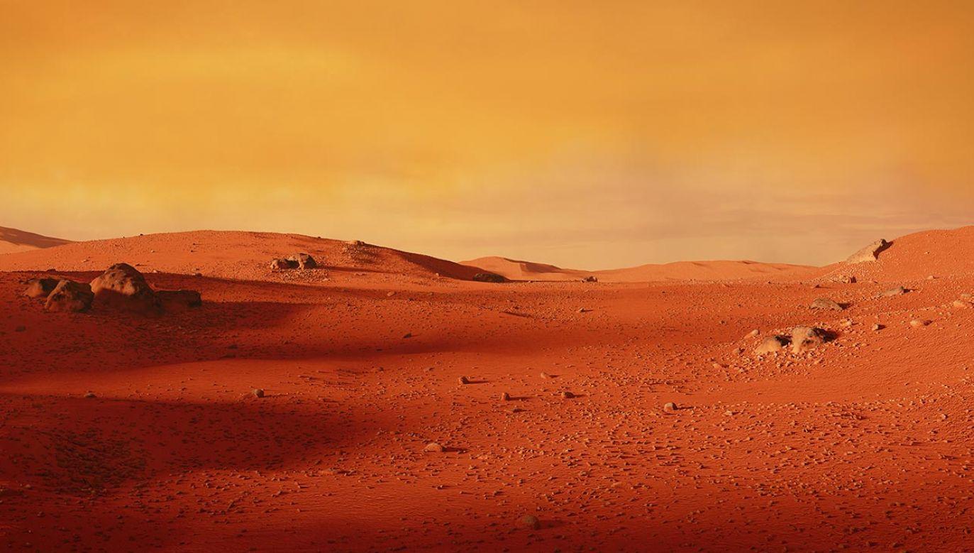 Badania nad rozwojem roślinności na Marsie (fot. Shutterstock/Dotted Yeti, zdjęcie ilustracyjne)