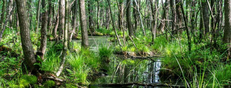 """Rozwiąż """"Wielki Test o Lesie"""""""