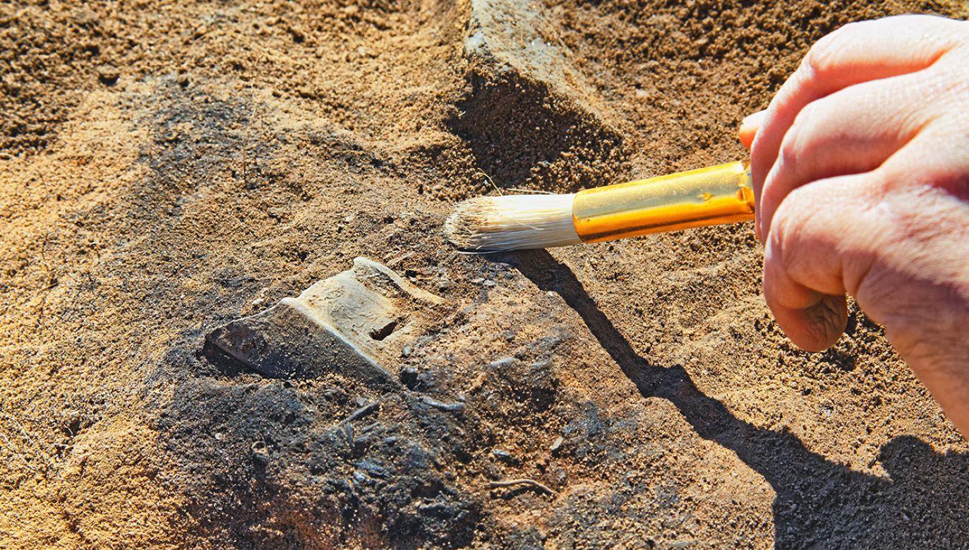 Odkrycia dokonano w pobliżu Hrubieszowa (fot. Shutterstock/krugloff)