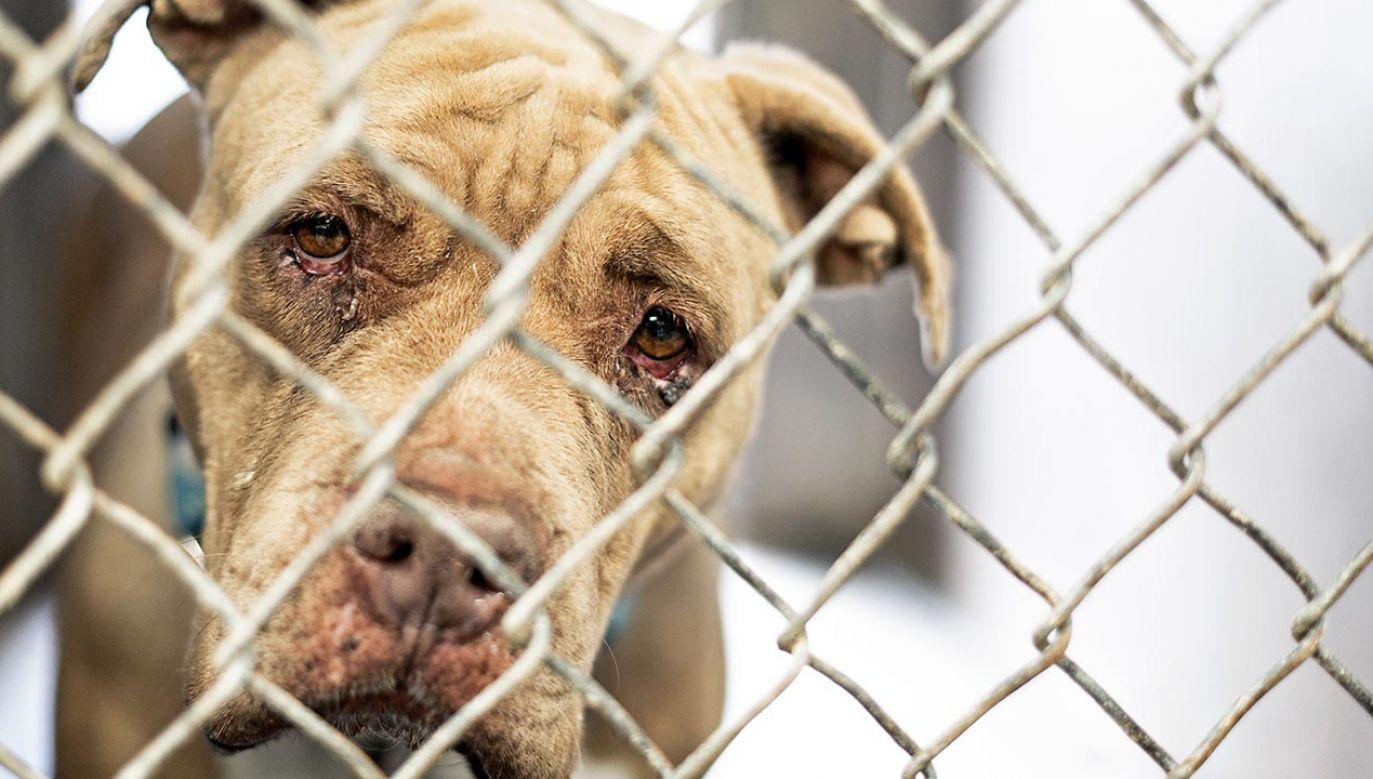 Zwierzęta były skrajnie wyczerpane, wychudzone, brudne i głodne, odwodnione, zapchlone, bez sierści, przerażone i zdziczałe (fot. Shutterstock/Susan Schmitz)