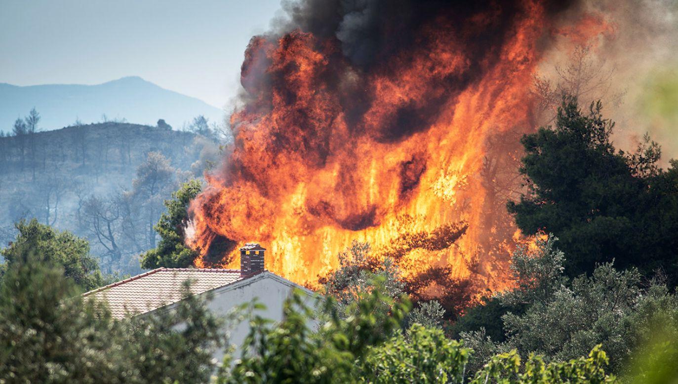 Z wielki pożarem walczy straż pożarna, wojsko i wolontariusze (fot. PAP/EPA/Wassilis Aswestopoulos)