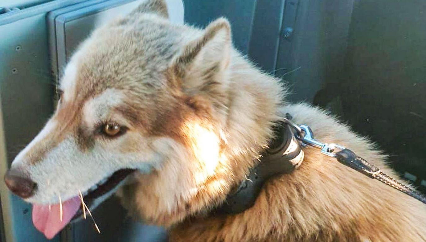 Pies był wycieńczony i odwodniony (fot. Policja lubuska)