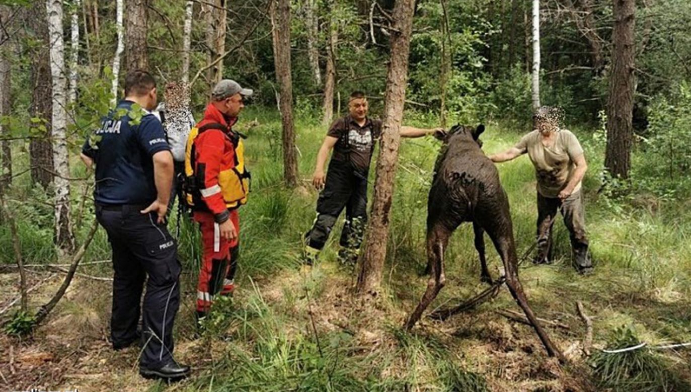 Z uwagi na podmokły teren i brak możliwości użycia sprzętu specjalistycznego ratownicy pomogli wydostać się zwierzęciu siłą własnych rąk (fot. Policja)