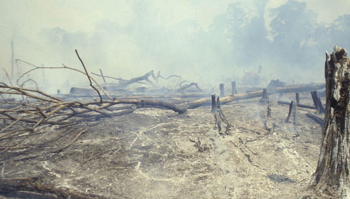 Według oficjalnych danych pożary na obszarze Amazonii są w tym roku większe o 83 proc. w porównaniu z takim samym okresem w ub. roku(fot. Ricardo Funari/Brazil Photos/LightRocket via Getty Images)