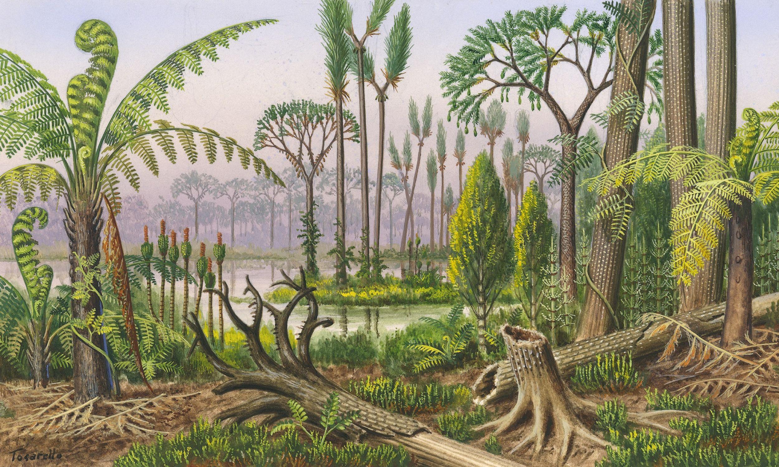 Flora karbońska: paprocie drzew (Megaphyton) i paproć wspinaczkowa, Stiglocalamites schultz, korzeń Sigillaria (Stigmaria), drzewo skali (Bothrodendron), Sigillaria, Calamites, Lepidodendron sternbergi. Fot. DeAgostini / Getty Images
