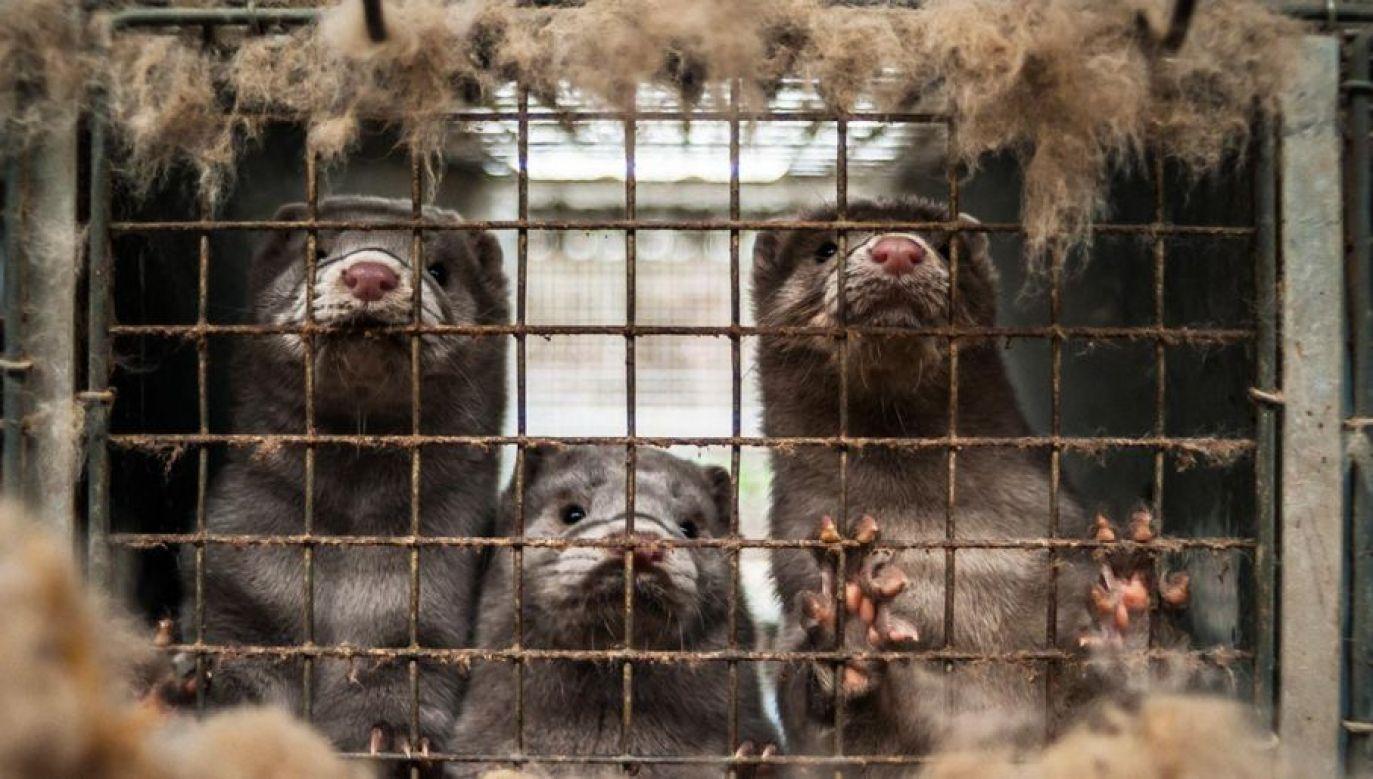 Sejm przyjął nowelizację ustawy o ochronie zwierząt (fot. Shutterstock/Nicolai Dybdal)