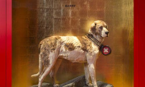 Ciało Barry'ego, spreparowane i wypchane, trafiło do Muzeum Narodowego w Bernie. W 1923 roku, za pomocą technik dermoplastycznych, zastąpiono je gipsowym odlewem, wiernie oddającym kształt psa. Do dziś zajmuje honorowe miejsce w hallu muzeum. Natomiast ciało Barry'ego pochowano na cmentarzu dla zwierząt , na tzw. Wyspie Robinsona, niedaleko Paryża. Fot. PraktikantinNMBE - Praca własna, CC BY-SA 4.0, https://commons.wikimedia.org/w/index.php?curid=70925546