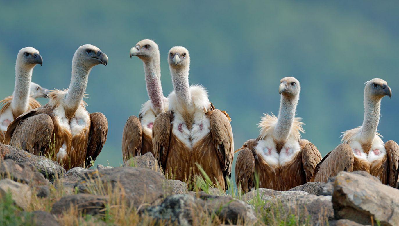 Ptaki prawdopodobnie zostały otrute (fot. Shutterstock/Ondrej Prosicky)